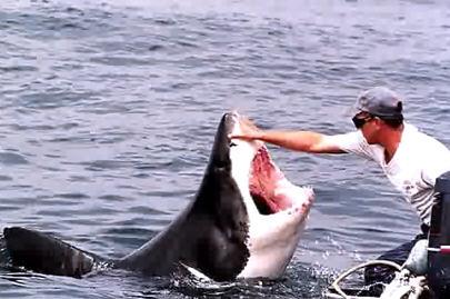 carezza squalo