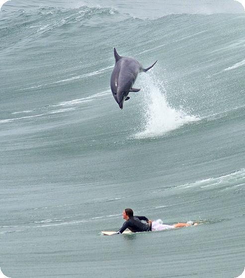 delfino che fa surf
