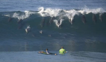 delfini sulle onde