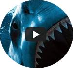 attacchi squali nel mondo