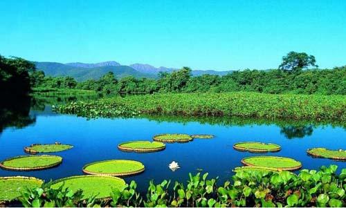 La palude del Pantanal in Brasile