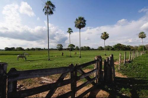allevatori nel Pantanal