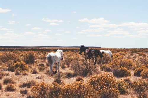 foto Valdes Peninsula, Argentina