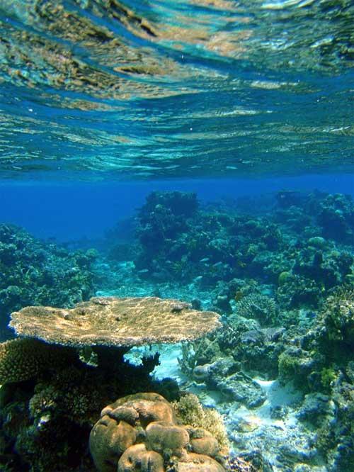 foto barriera corallina, Fiji